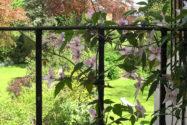 clematis-balkon