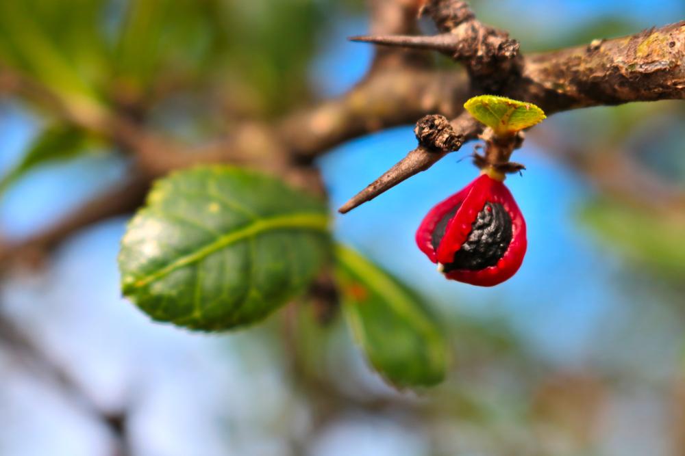feuerdorn-vermehren