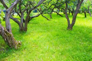 Die Wurzeln des Flieders – Fakten und Tipps