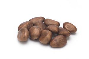 Mispelkerne richtig einpflanzen – so gelingt es Ihnen