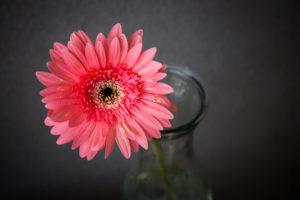Blumen auf den Tisch – Gerbera in der Vase