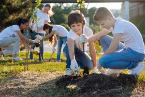 Speierling pflanzen – das sollten Sie beachten