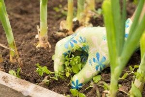 Unkraut im Gemüsebeet bekämpfen