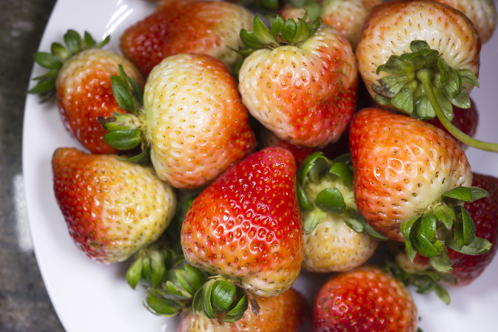 erdbeeren-nachreifen