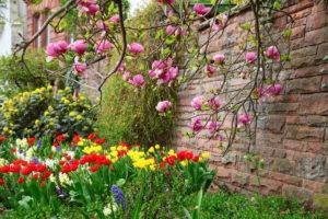 So gedeiht Ihre Magnolie im Garten