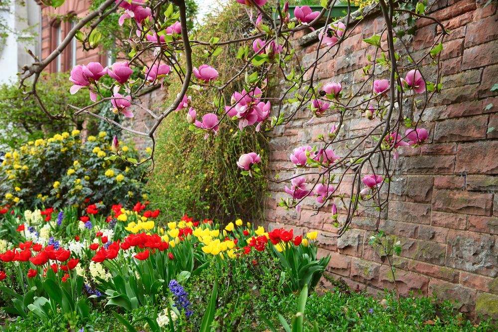 magnolie-garten