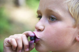 Können Blaubeeren giftig sein?