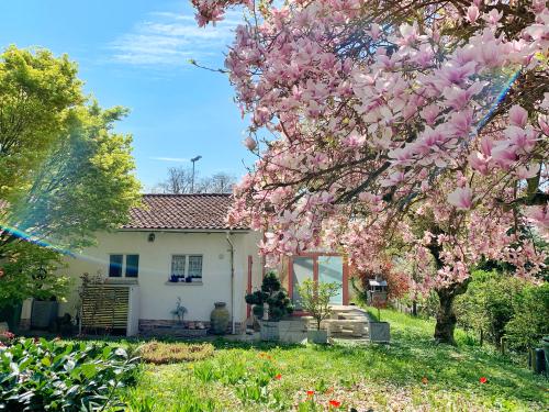 magnolie-wachstum