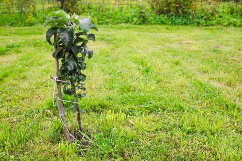saeulenapfel-schneiden