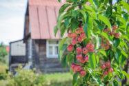 saeulenapfel-sorten