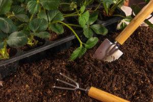 Beeren im Garten anbauen – die wichtigsten Informationen