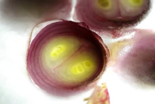 zwiebeln-einfrieren