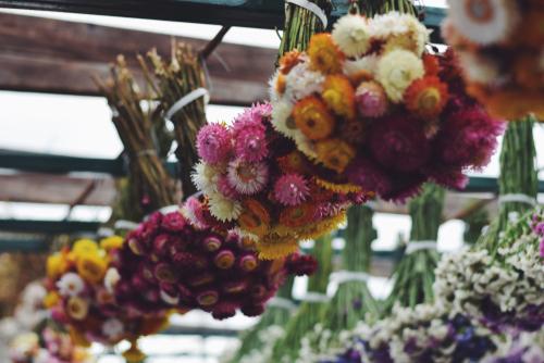 strohblumen-trocknen