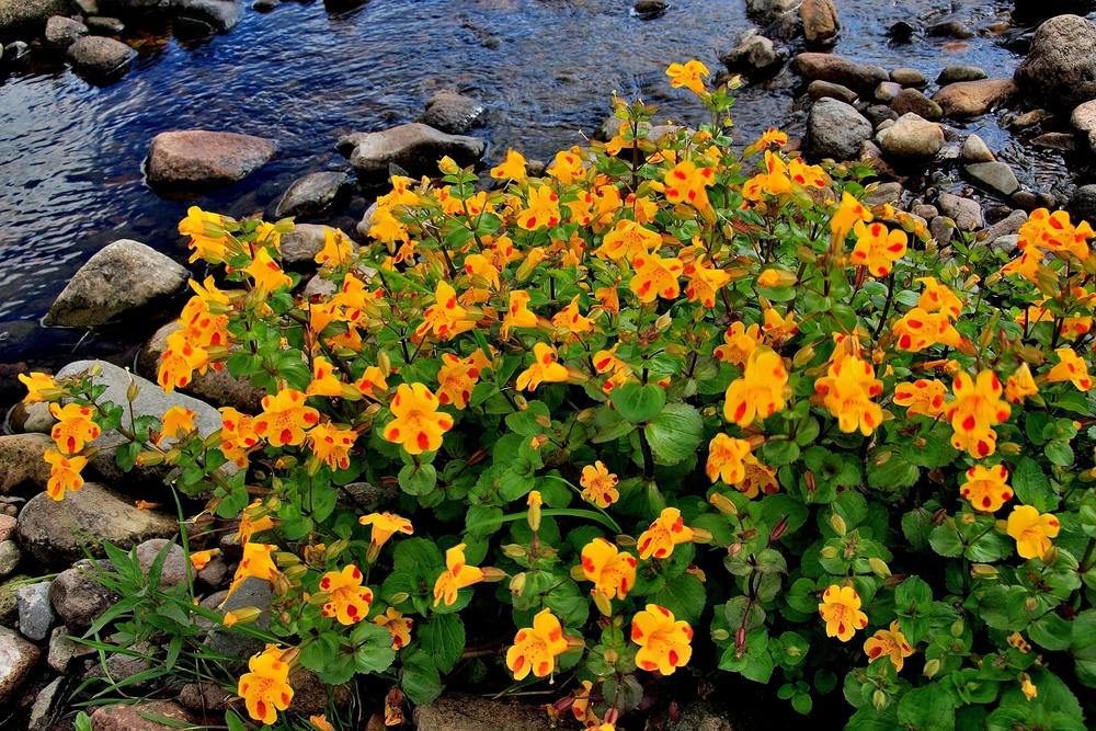 Welche Pflanze Stirbt Nach Der Blüte Ab