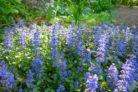 guensel-bluetezeit