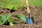 zucchini-anbau