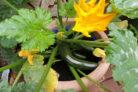 zucchini-im-topf