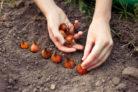fruehjahrsblueher-pflanzen