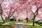 magnolie-hecke