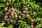mango-giessen